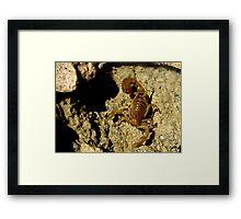 Stripe-tailed Scorpion Framed Print
