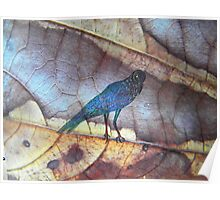 blue bird - leaf fantasy - natural world  Poster