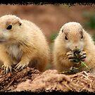 Prairie Dogs by Vanwraithen