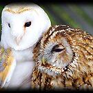 Friendly Owls by Vanwraithen