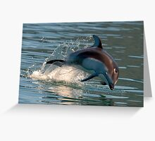 Pacific White-sided Dolphin Greeting Card