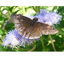 Butterfly ~ Funereal Duskywing Photographic Print