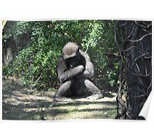 Pouting Gorilla Poster