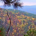 Ozark Mountains National Forest, Arkansas by David  Hughes