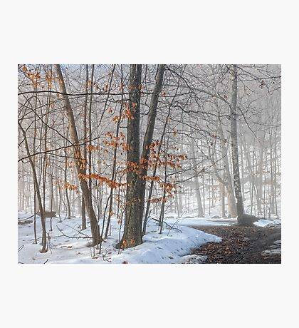 In the Woods Photographic Print