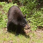 Black Bear by Stephen Stephen