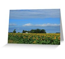 Sunflower Field on the Prairies Greeting Card