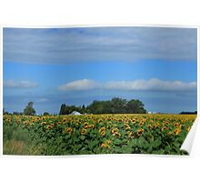 Sunflower Field on the Prairies Poster