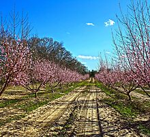 Peach Orchard by Dannn