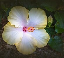 Hibiscus #4 by Elaine Teague
