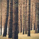 Old Woods by maxxx