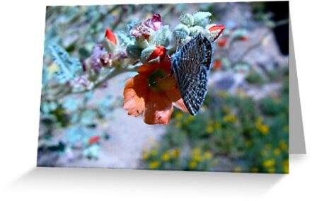 Butterfly ~ Marine Blue by Kimberly Chadwick