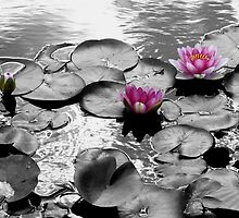 water lilies and lily pads by tego53