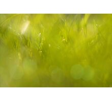 The closest green Photographic Print