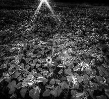 Alone Again by Bob Larson