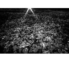 Alone Again Photographic Print