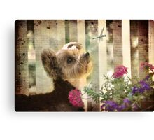 Gracie - Live life to the fullest Canvas Print
