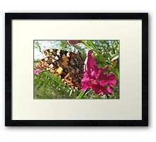 Butterfly ~ Painted Lady Framed Print