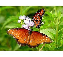 Pollination Series ~ 5 Photographic Print