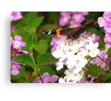 Pollination Series ~ 4 Canvas Print