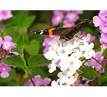 Pollination Series ~ 4 Photographic Print