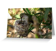 Costa's Hummingbirds  ~ 3 days old ~ 2nd series Greeting Card
