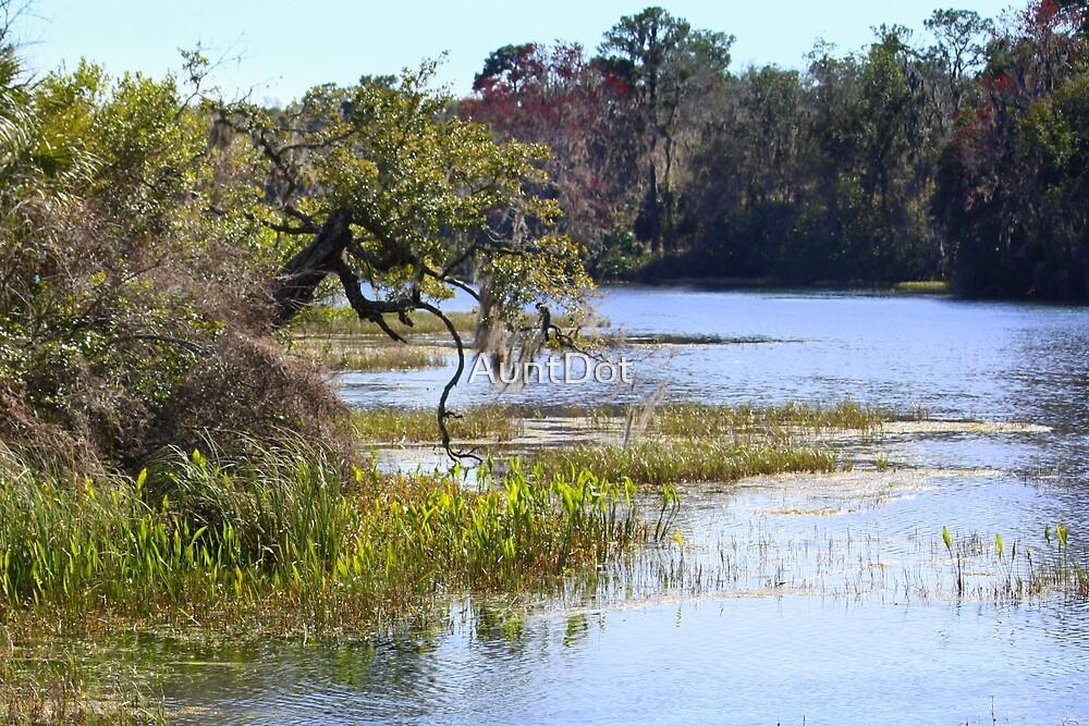 Florida's Rainbow River by AuntDot