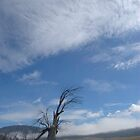 Dead Gum Tree by suziimages