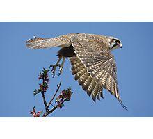 Falcon Liftoff Photographic Print