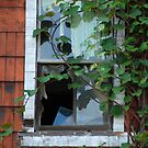 Broken Window by Zolton