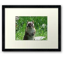 No Peanuts?!!! Framed Print