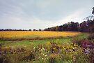 Autumn Field by Gene Walls