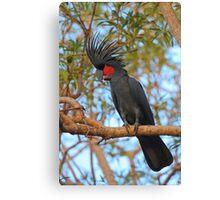 Palm Cockatoo Canvas Print