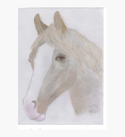 Portrait of a Horse for JD Photographic Print