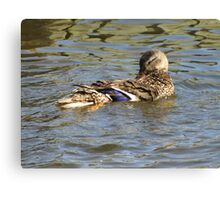 Laid Back Duck Canvas Print