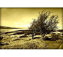 Two Trees on the Moor Photographic Print