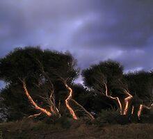 cyprus trees by Mark Malinowski