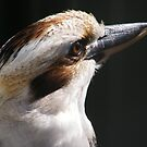 The Laughing Kookaburra. by Esther's Art and Photography