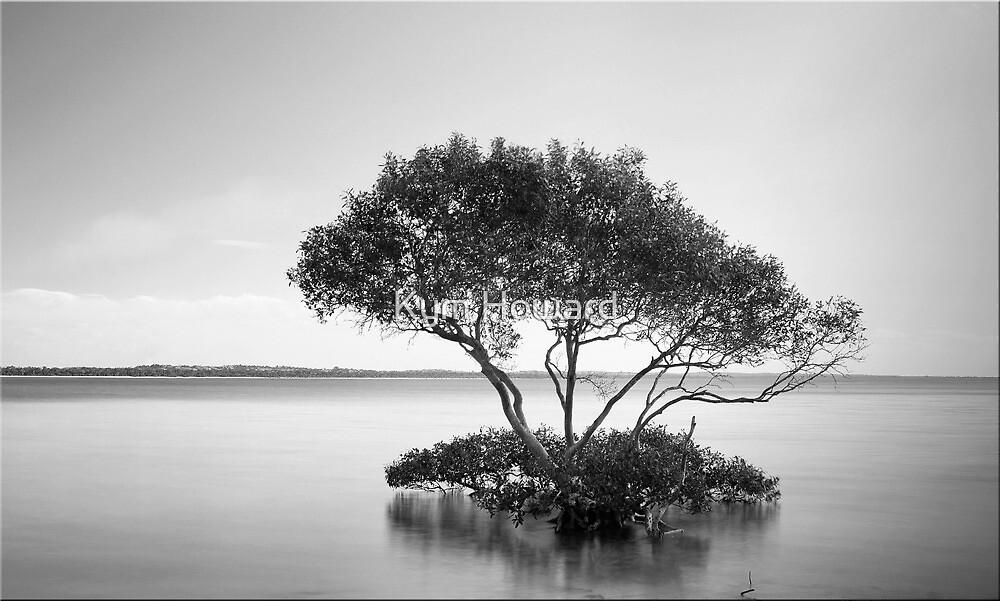 The Mangrove Tree by Kym Howard