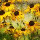 Mellow Yellow by pat gamwell