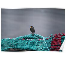 Robin on the fishing nets at Oban Poster