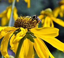 Bee going to work on flower by Rbyham