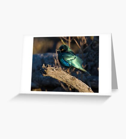 What Beauty Greeting Card