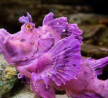 Scorpionfish by Scott Carr