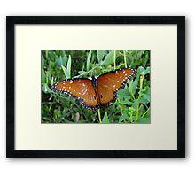 Butterfly ~ Queen Framed Print
