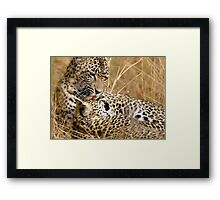 Karula and cub Framed Print