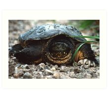 The Old Snapping Turtle Art Print