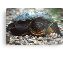 The Old Snapping Turtle Metal Print
