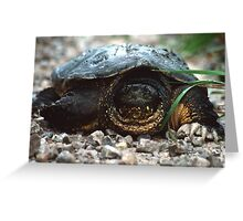The Old Snapping Turtle Greeting Card