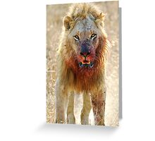 Majingilane - Male Lion - Hyena Intimidation Greeting Card